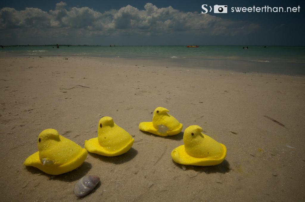 Peeps sunning at the beach